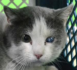 Кот с поврежденным глазом